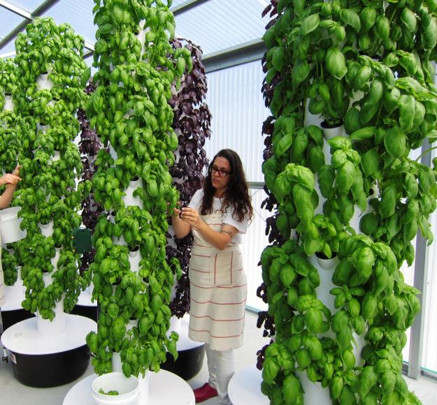 Vertical Gardens, organic and fabulous