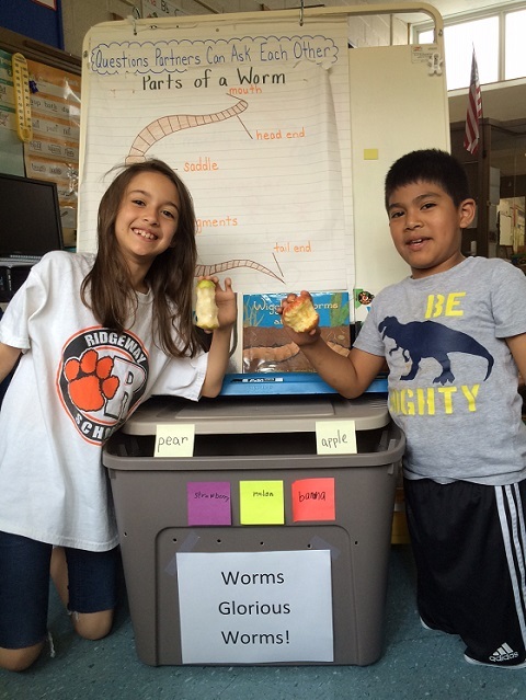 Worms, Worms, Glorious Worms, White Plains Ridgeway Students LOVE their new friends