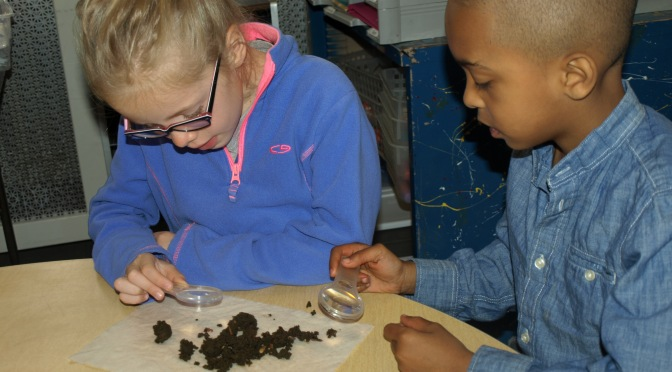 New Rochelle Webster 1st Graders Are Digging Worms!