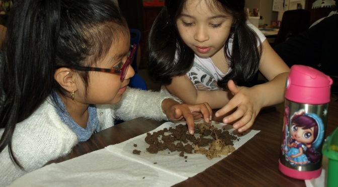 """The Worms are Back!"" New Rochelle Webster 1st Graders Learn About Worms"