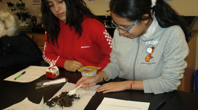 Mt Vernon Lincoln students examine soil samples to learn why composting is so important
