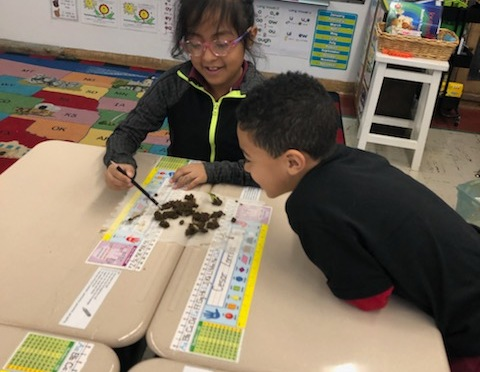 Mt Vernon Hamilton first graders examine the role of worms in the environment